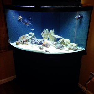 92 gallon FOWLR Corner aquarium