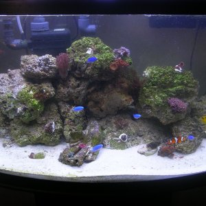 46 gallon reef