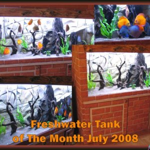 Freshwater Tank of The Month July 2008