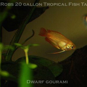 Robs 20 gallon tropical Fish