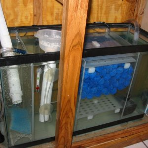 sump with diy protein skimmer, and bio balls.