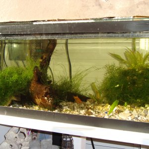 20 g long (freshwater/live plant tank) C02 injection