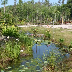 Bog area that helps collect water from our property in West Palm Beach, Flo