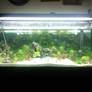 55g lots of fish and lots of live plants co2 fluval 405 custom made in and