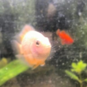 JellyBelly