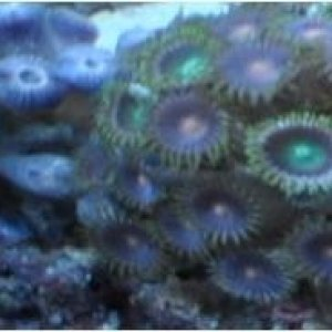 asorted zoas