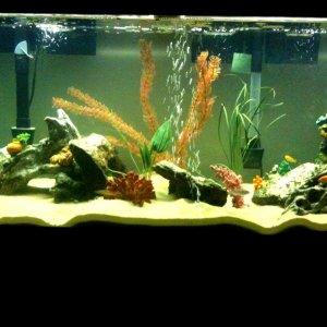 My New Baby Cichlids
