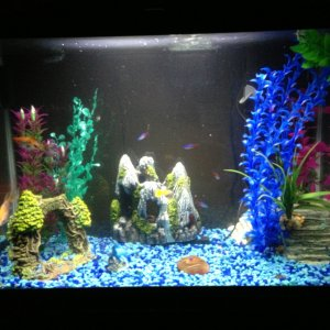 My tank and fish