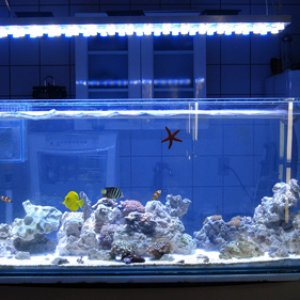 DIY Aquarium led light