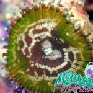 live tropical fish, marine fish, freshwater fish, corals, clams