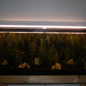 55 Gallon Aquascape