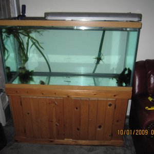 90_Gal_Cycling_Tank_with_Plants