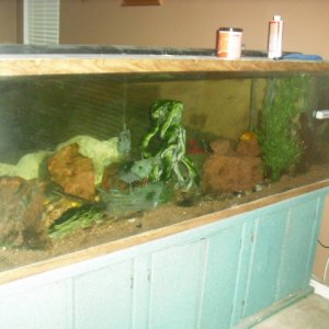 For Sale: 130 gallon tank w/ breeding colony yellow labs