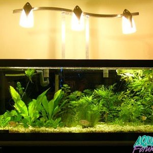 Vanity Light for Fish Tank