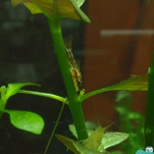 Young Oto on Repens