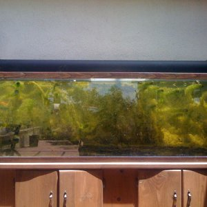 150 gallon outdoor tank