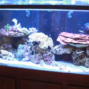 125 mixed reef